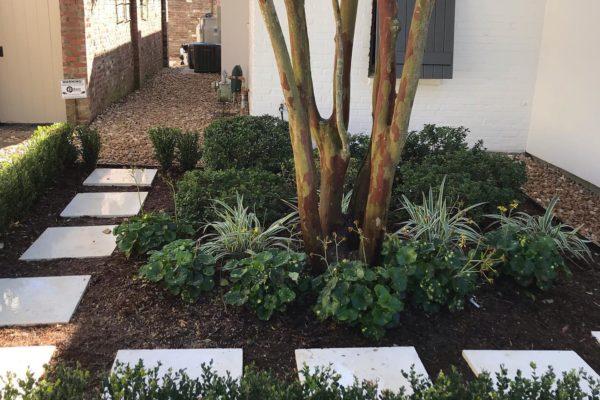plants around trees